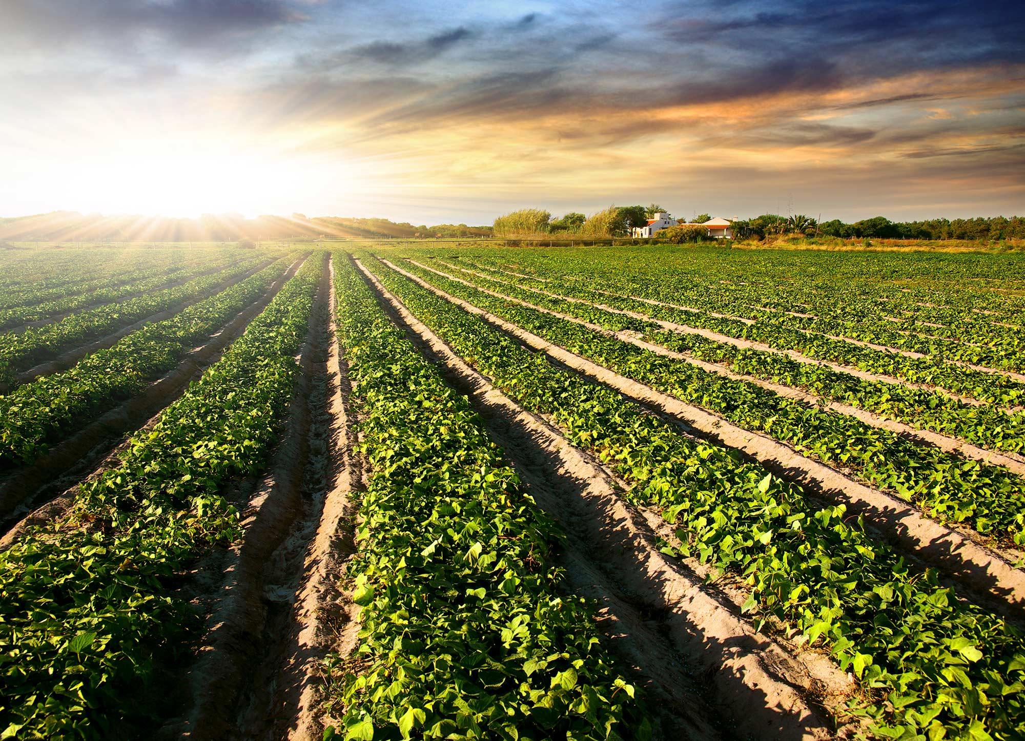 Fertilizantes ecologicos